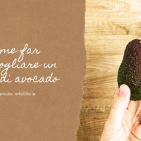 Come far germogliare un seme di Avocado